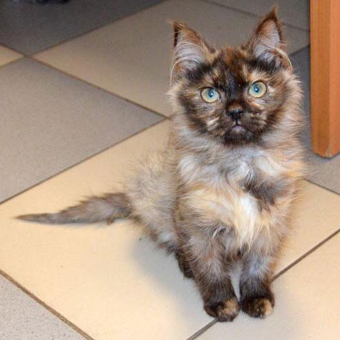 Очень красивая малышка Сова в дар. 5 месяцев